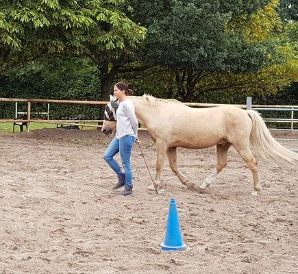 pferdegestuetztes-coaching-authentische-