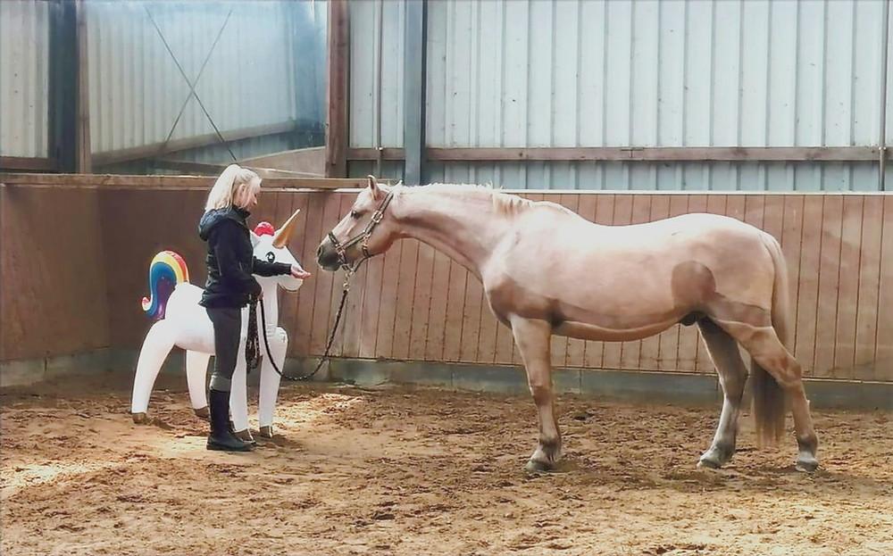 Gelassenheitstraining, Angst überwinden, Mut, Pferdegestütztes Coaching