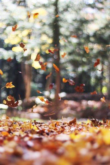 Und es kam mir vor, als würden die Bäume uns feiern und mit Konfetti bewerfen. In diesem Moment ist mir die Schönheit des Loslassens bewusst geworden.