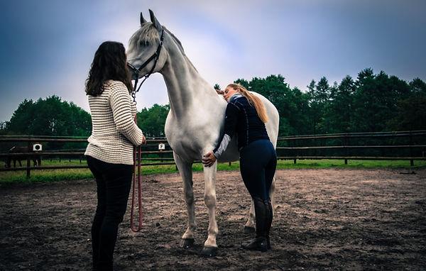 coaching-mit-pferden-burnout-praevention