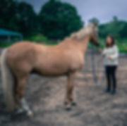 coaching-mit-pferden-fuer-kommunikation-