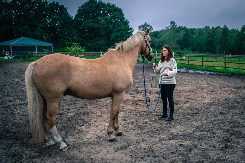 Im Coaching mit Pferden lernst Du für Deinen Alltag mehr Fokus, Stressmanagement und sogar Burnoutprävention.