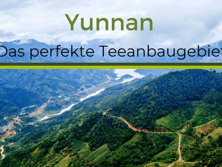 Yunnan - Das perfekte Teeanbaugebiet