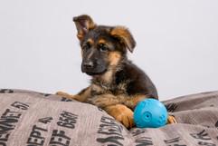 Puppies-2.jpg
