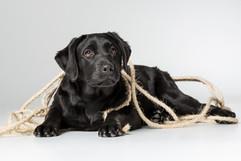 Puppies-4.jpg