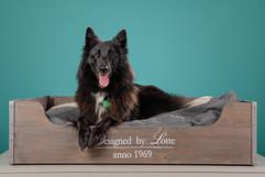 Fotoshoot-Hond.jpg