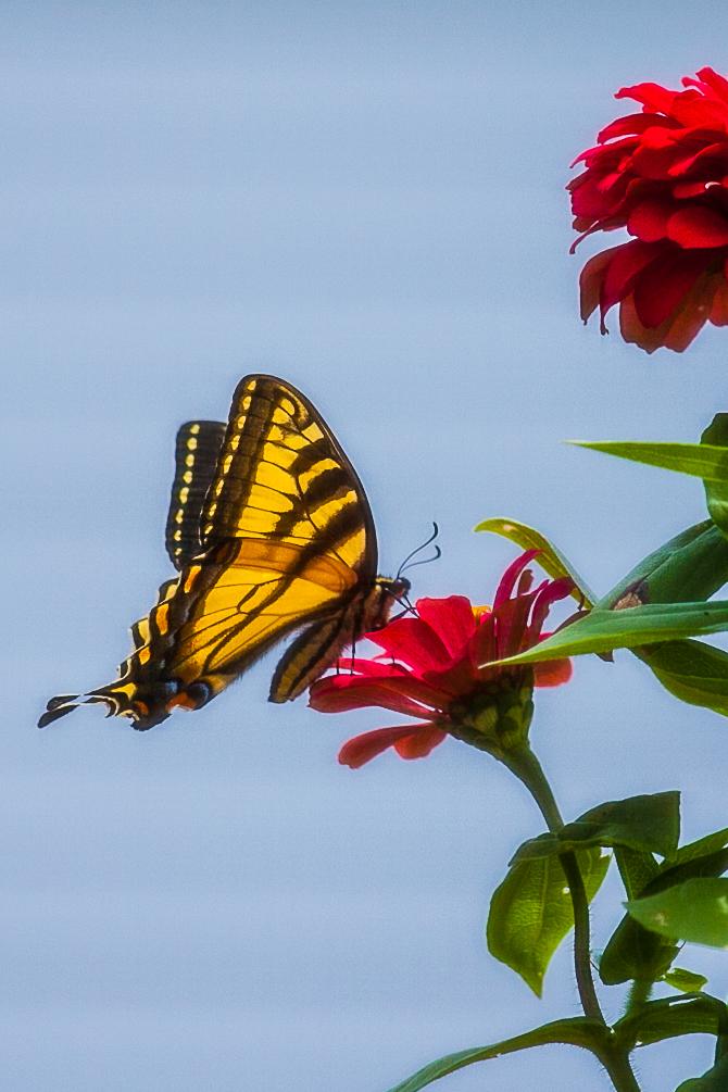 2012 Monark 6405 1.jpg