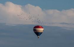 2012 Balloon Festival 8319.jpg
