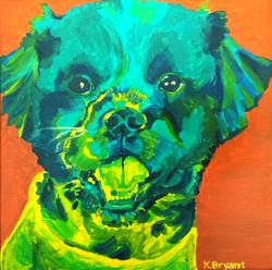 Ollie the dog