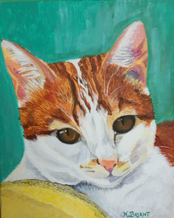 Mr. Milo the cat