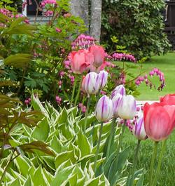 2014 Tulips 31 mod-1.jpg
