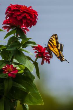2012 Monark 6538.jpg