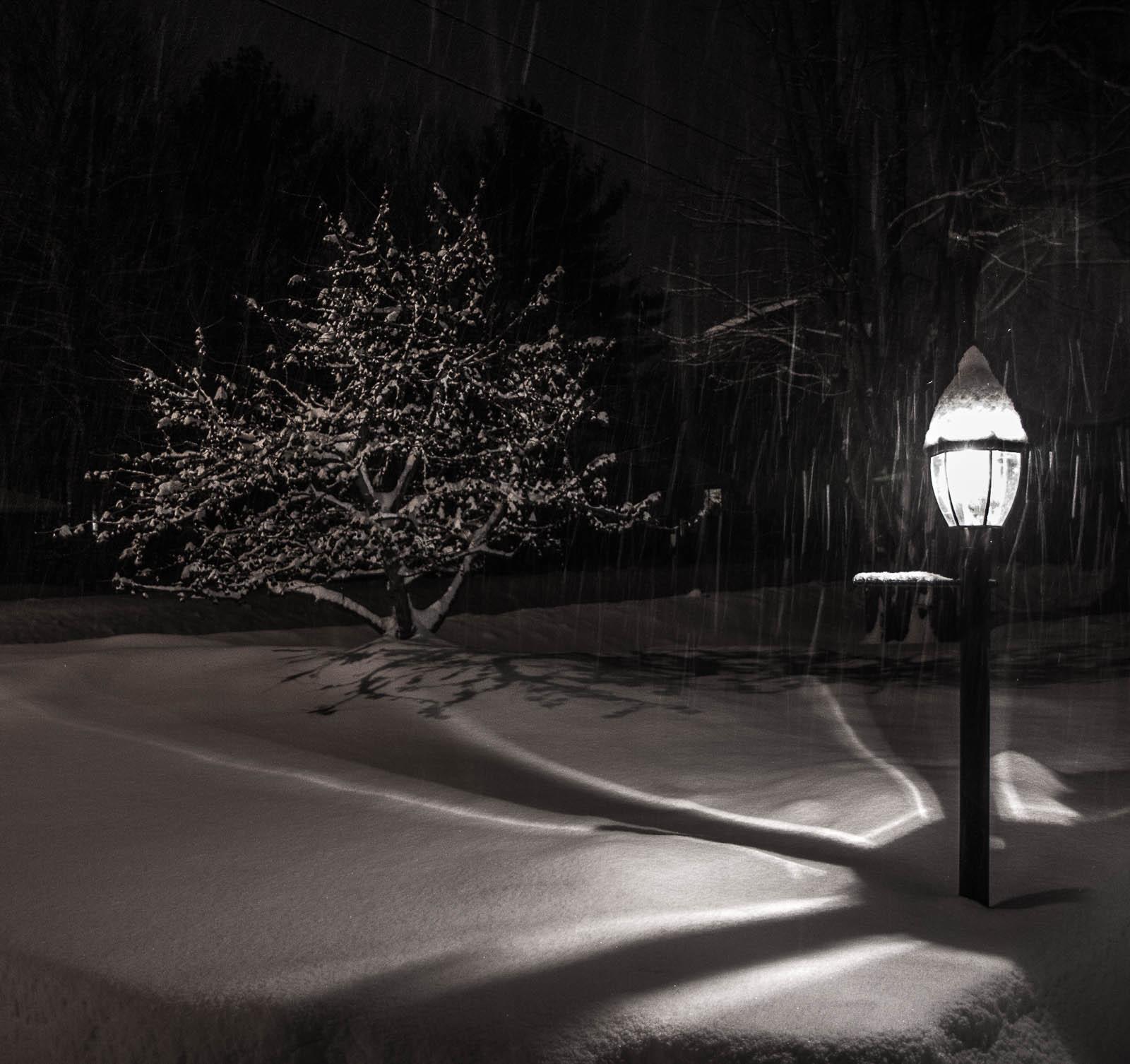2015 Tree & Lamp Post 10-1.jpg
