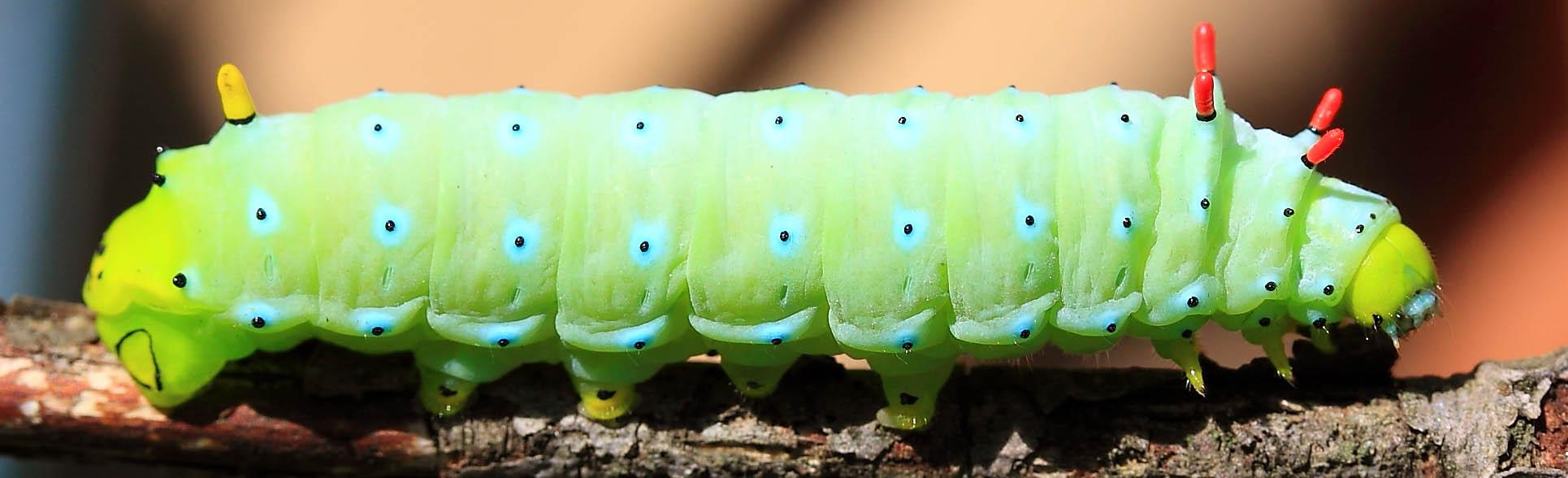 2012 Silkworm 8070-2.jpg