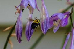 2014 Hostas & Bee 54-1.jpg