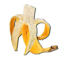eat-my_banana_90_x_95_cm_öl_auf_ausgesägter_alu-dibondplatte