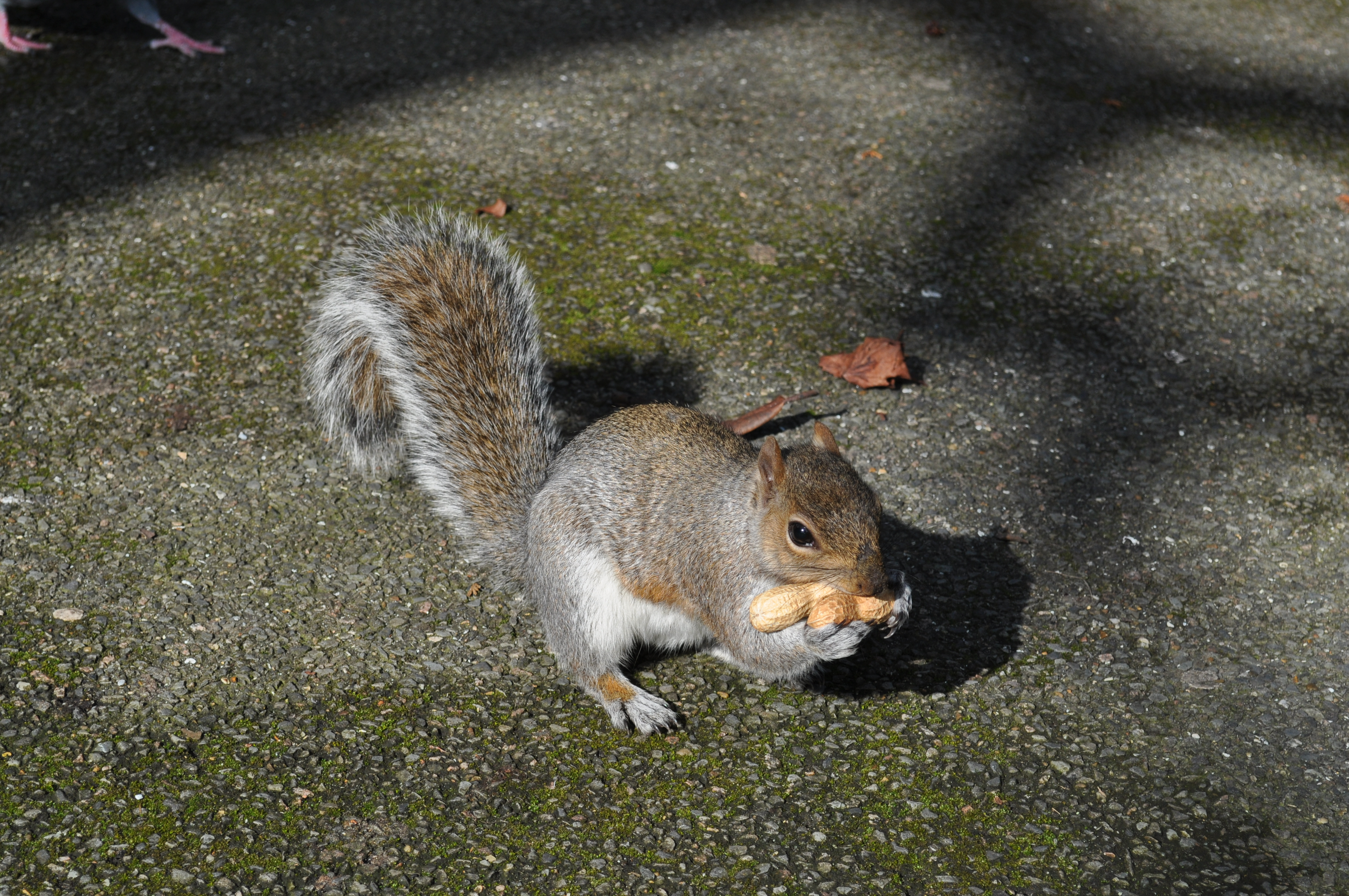 Nuts and Bushy Tails