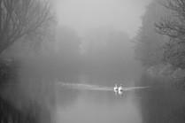 MONO: 'Misty Swans' by Jonny Clark - Shorts Camera Club