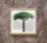 treeoflifemockupNEW.png