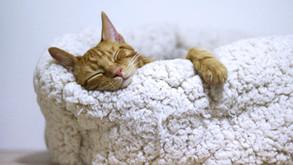 1.10 Sleepy Head