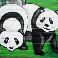 st gs pandas.jpg