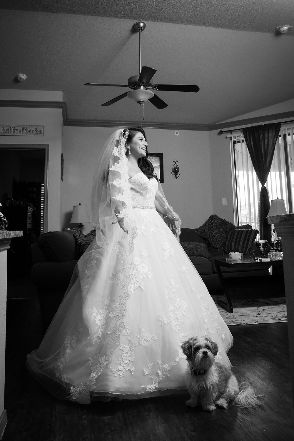 dog and wedding dress with lace veil