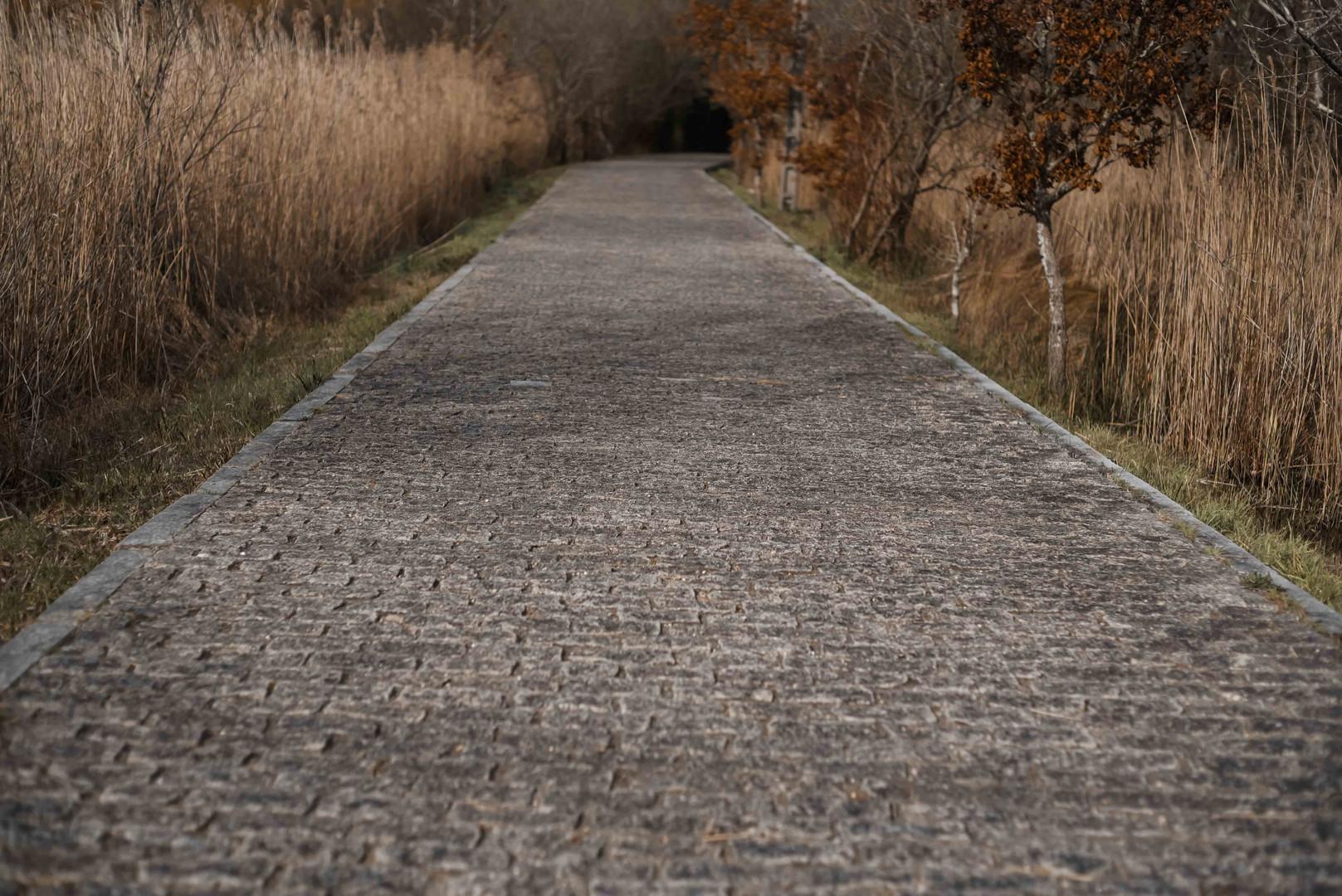 tessymorelli_caminodesantiago_path (19 o
