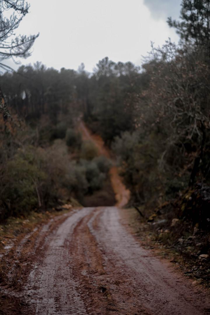 tessymorelli_caminodesantiago_path (5 of