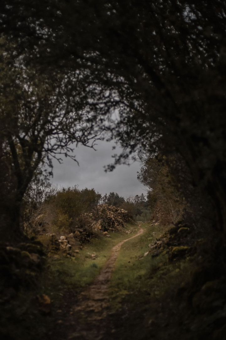 tessymorelli_caminodesantiago_path (6 of