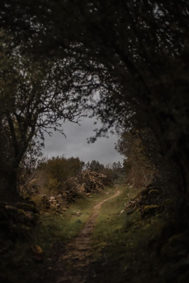 tessymorelli_caminodesantiago_path (6 of