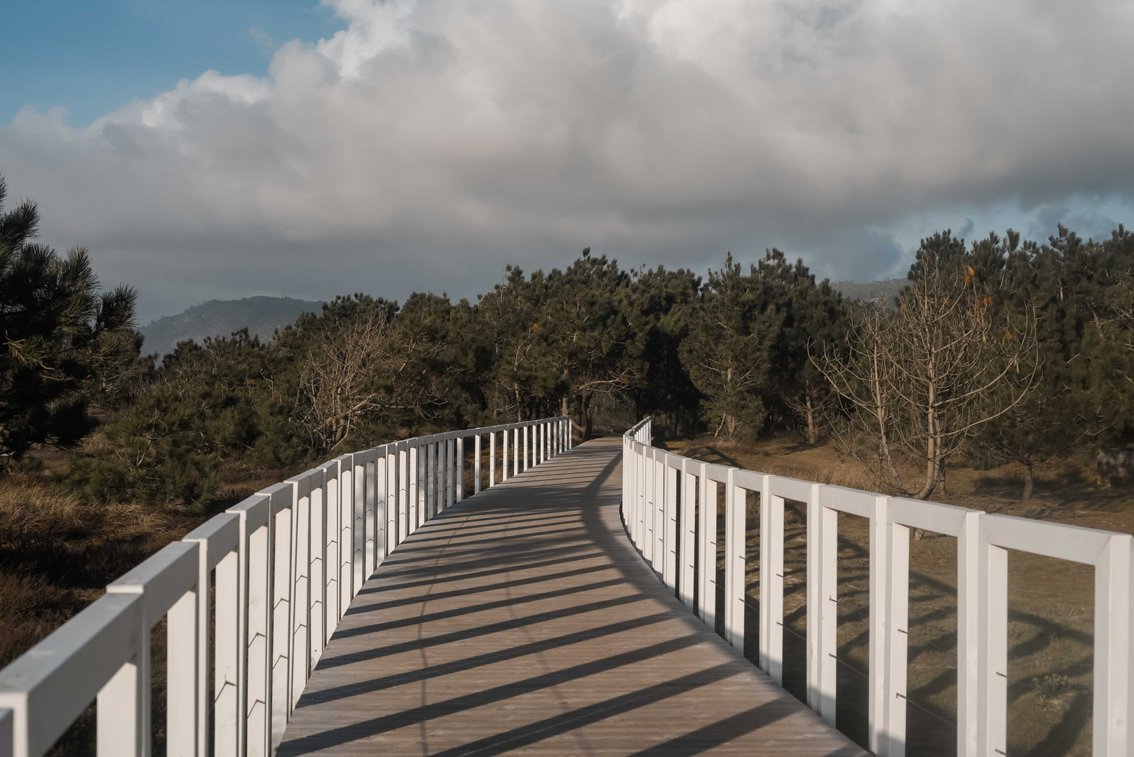 tessymorelli_caminodesantiago_path (16 o