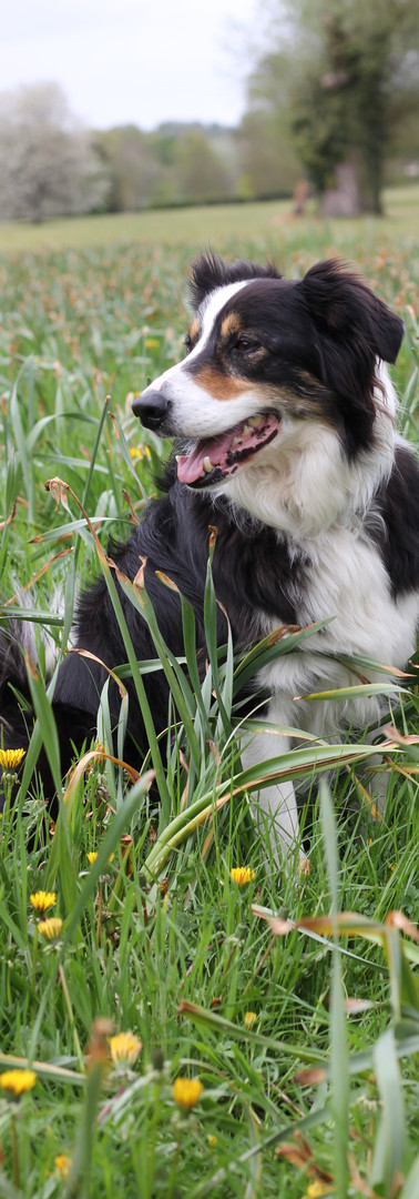 Max In The Grass