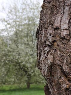 Bark & Blossom