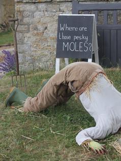 Where Are Those Pesky Moles?