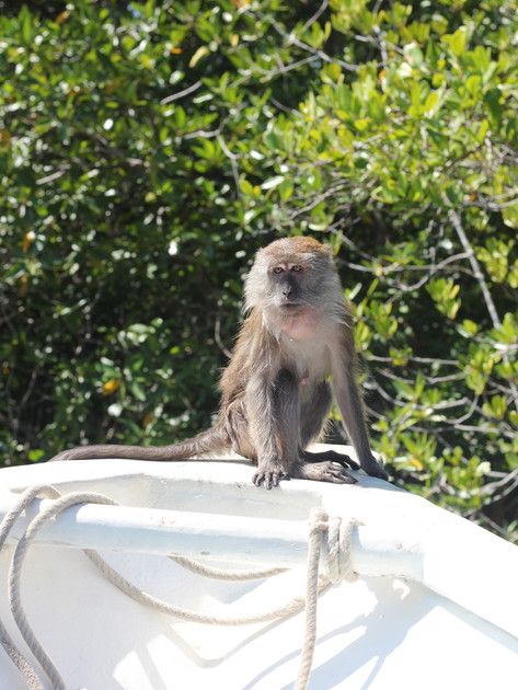 Monkey On The Boat