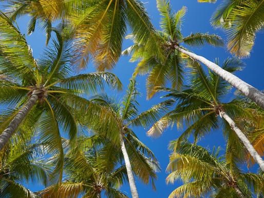 A chaque plage son activité en Guadeloupe !