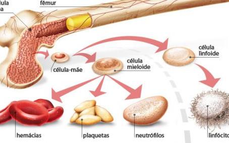 Tudo que você precisa saber sobre transplante de medula óssea