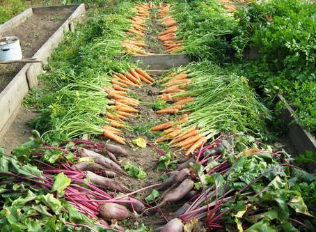 Nutra bem as plantas: sua saúde só tem a ganhar