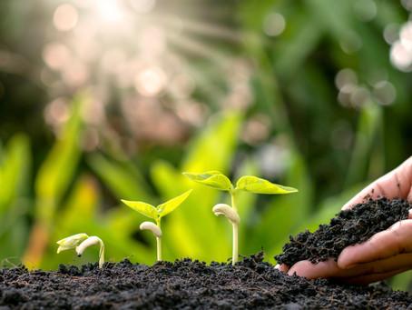 A agricultura de precisão a serviço da adubação ambientalmente correta