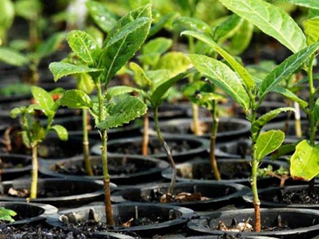Brasil lança projeto Nutrientes para a Vida