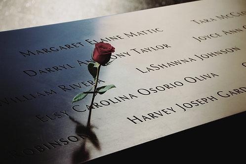 Rose in the 9/11 Memorial, New York