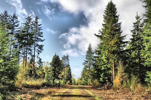 East Saltoun Woods
