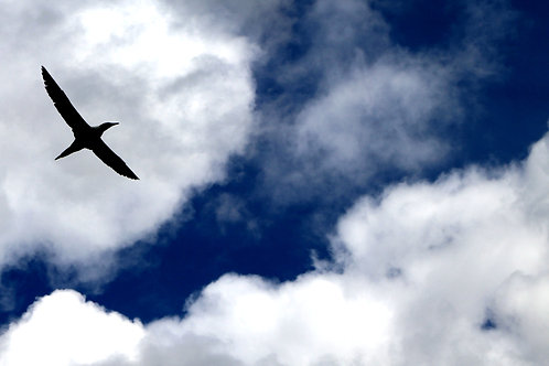 Bird Flying Through The Clouds