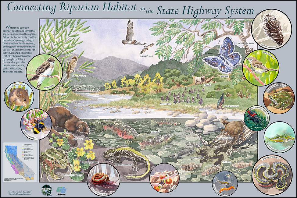 Final Stream Habitat Poster RLC Full Siz