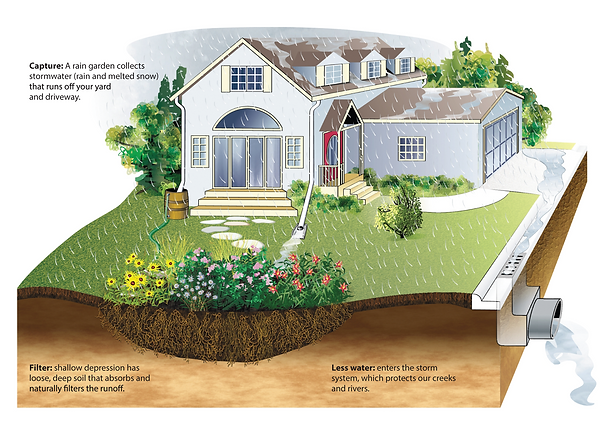 house-and-rain-garden-illustration-1.png