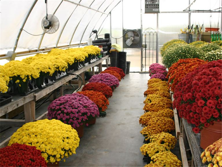 Wholesale/Retail Plant Nursery For Sale in Oklahoma City