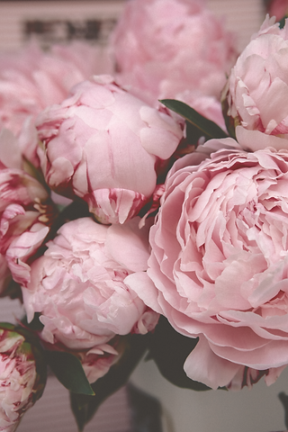 selective%20focus%20photography%20of%20pink%20petaled%20flower_edited.png