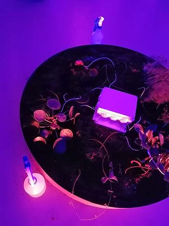 Ecosystem I .jpg