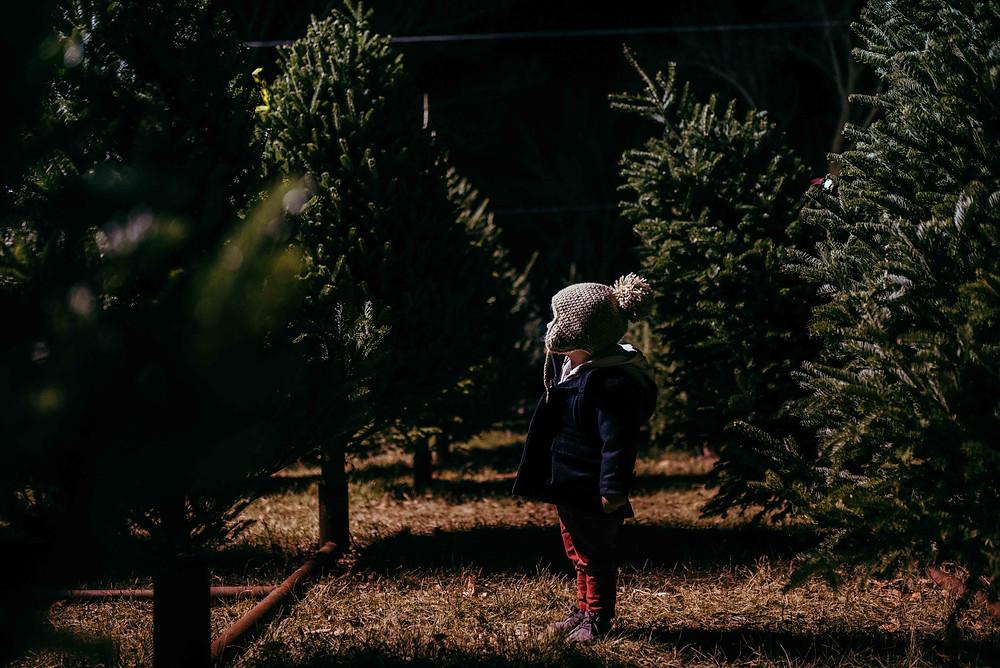 The Tree Hunt