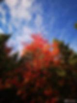微信图片_20200204103654.jpg